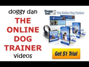 Dans Online Dog Trainer Trial
